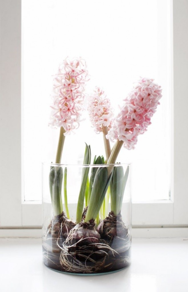 A-Spring-Time-Favourite-The-Hyacinth_03