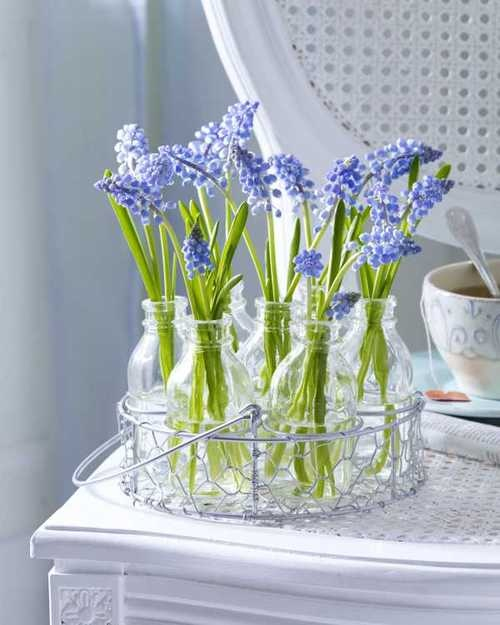 A-Spring-Time-Favourite-The-Hyacinth_06