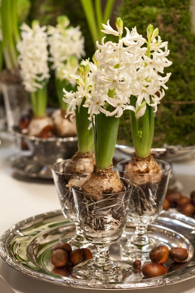 A-Spring-Time-Favourite-The-Hyacinth_07