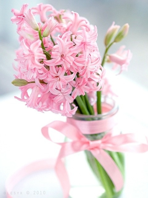 A-Spring-Time-Favourite-The-Hyacinth_08